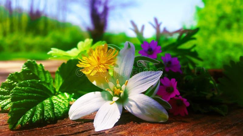 Wiosna kwitnie na stole w lesie Siena fotografia royalty free