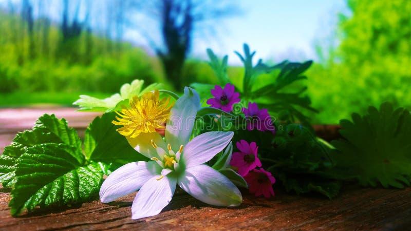 Wiosna kwitnie na stole w lesie Siena obrazy royalty free