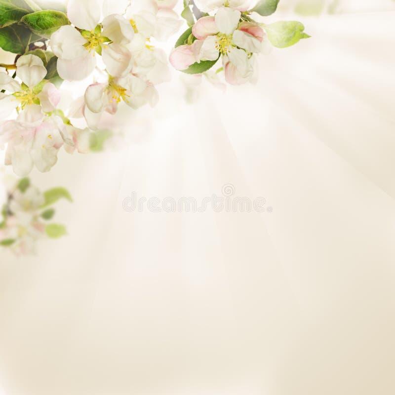Wiosna Kwitnie na tle obrazy stock