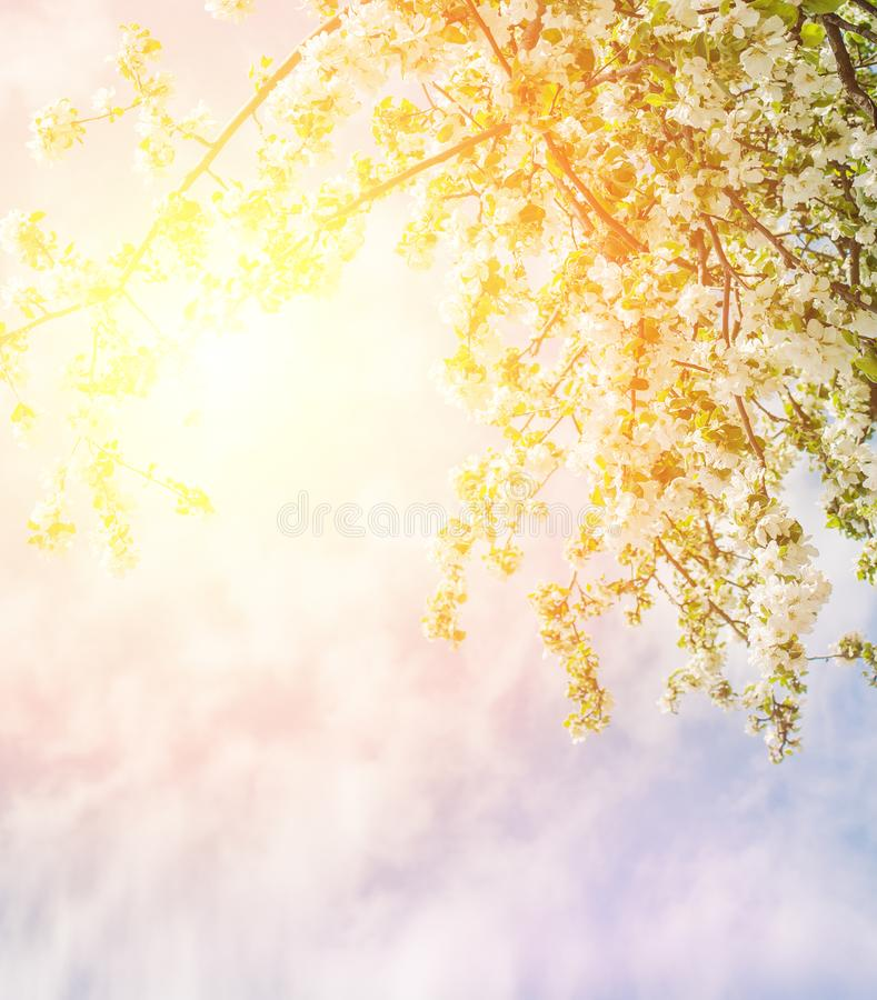 Wiosna kwitnie przeciw niebu, wiosen zdrowie tło obraz stock