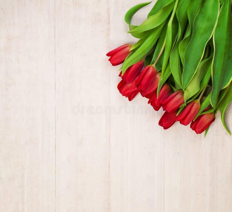 Wiosna Kwitnie tło z Netherlandish tulipanem zdjęcie royalty free