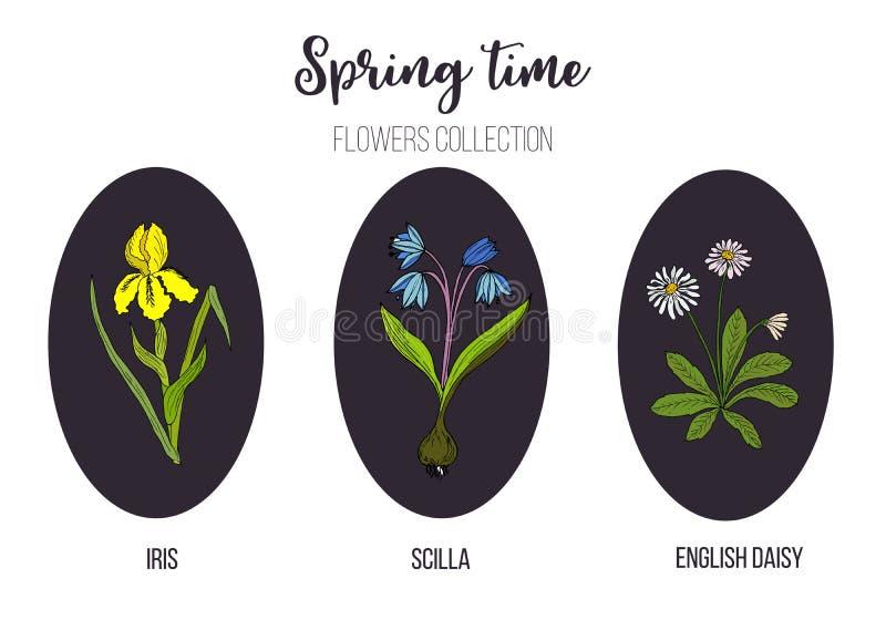 Wiosna kwitnie ustalonego irysa, cebulica, angielska stokrotka ilustracji