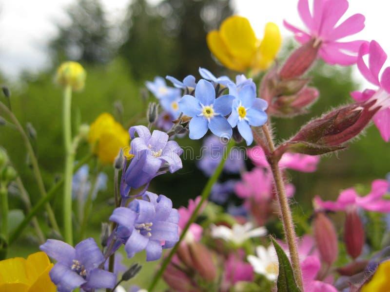 Wiosna kwitnie w Francja zdjęcia stock