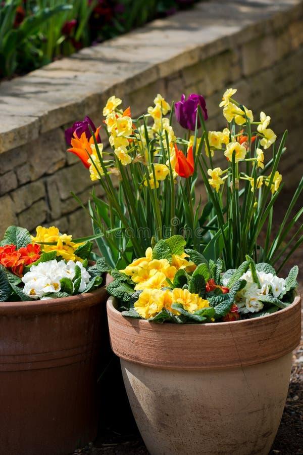 Wiosna Kwitnie w kwiatu garnku fotografia stock