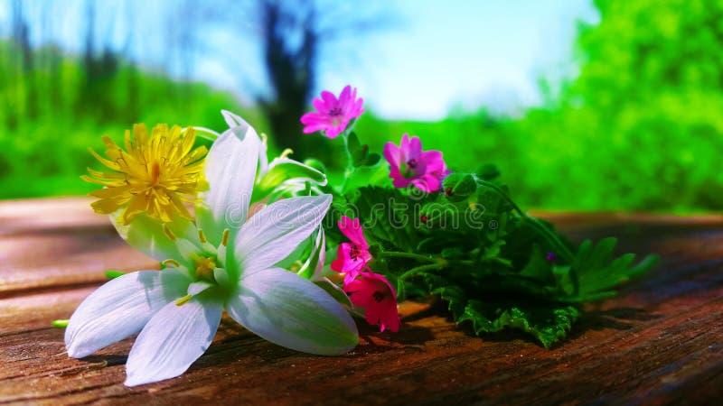 Wiosna kwitnie w lesie Siena obrazy stock