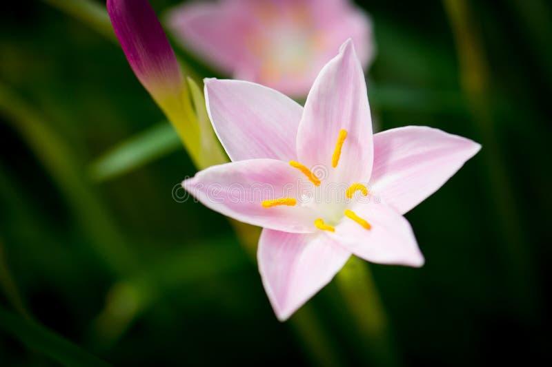 Wiosna kwitnie w parku obrazy royalty free