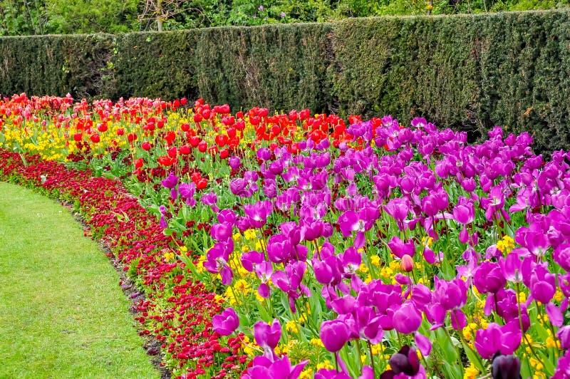 Wiosna kwitnie w regenta parku, Londyn, Zjednoczone Królestwo zdjęcie royalty free