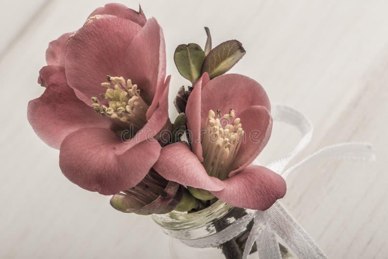 Wiosna kwitnie w wazie na drewnianym stole obraz stock