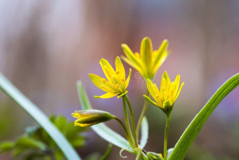 Wiosna kwitnie zbliżenie obrazy stock