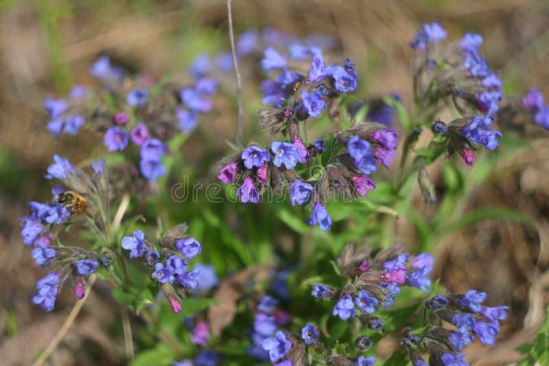 Wiosna las kwitnie zbliżenie fotografia stock