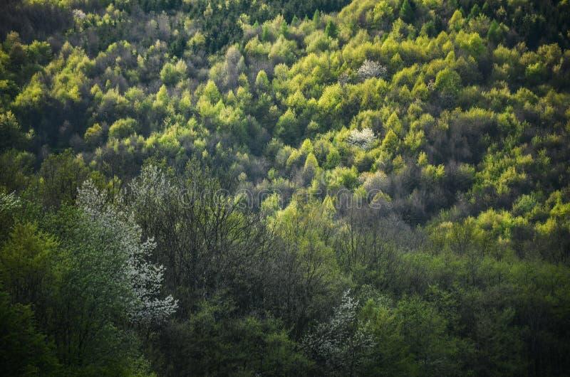 Wiosna las z wszystkie kolorów brzmieniami zieleń, dodatku specjalnego światło f - fotografia od dzikiej natury, drzew, liści i b zdjęcia royalty free