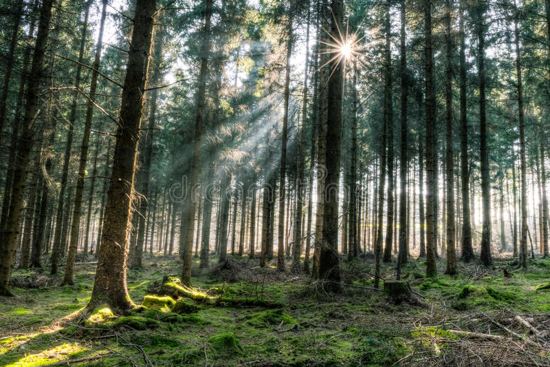 Wiosna lasowy HDR A fotografia stock
