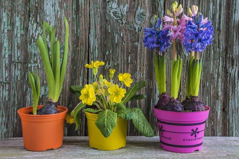 Wiosna lub Easter pojęcie obraz royalty free