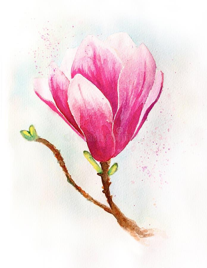Wiosna magnoliowy kwiat na błękitnej tło akwareli ilustracji z ścinek ścieżką ilustracja wektor
