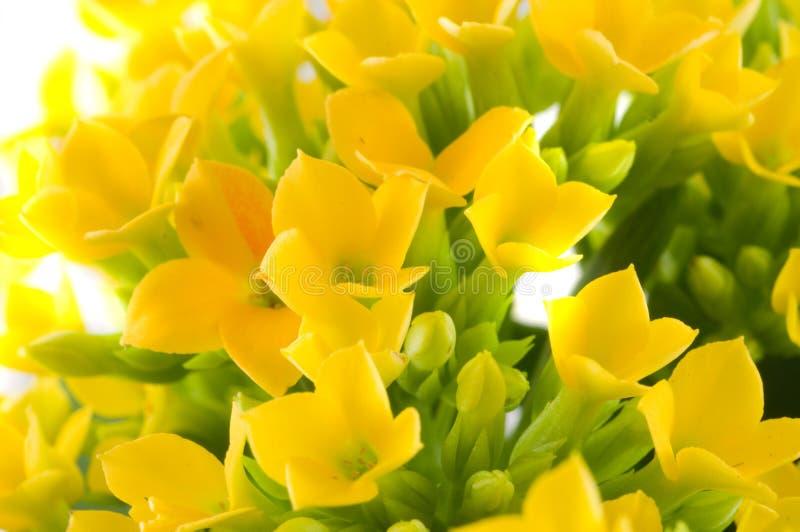 wiosna makro zdjęcie stock