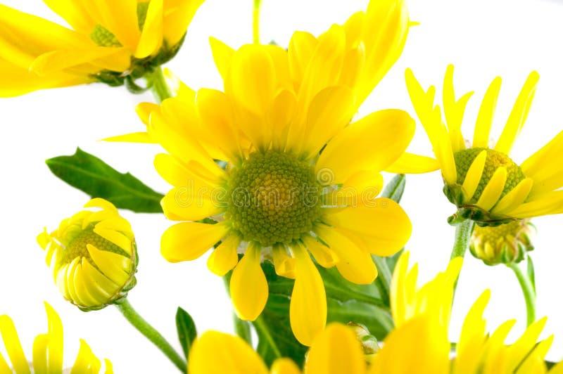 wiosna makro fotografia stock