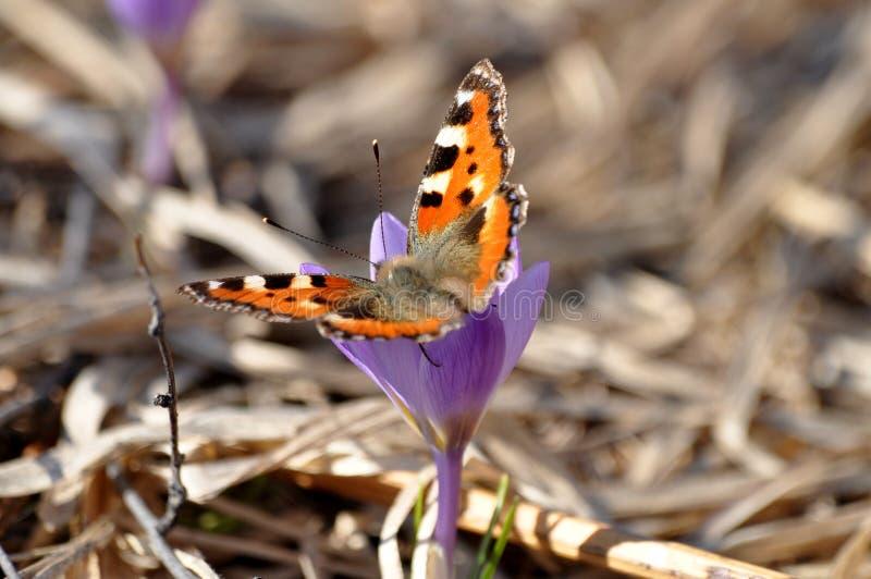 Wiosna motyl i obraz stock
