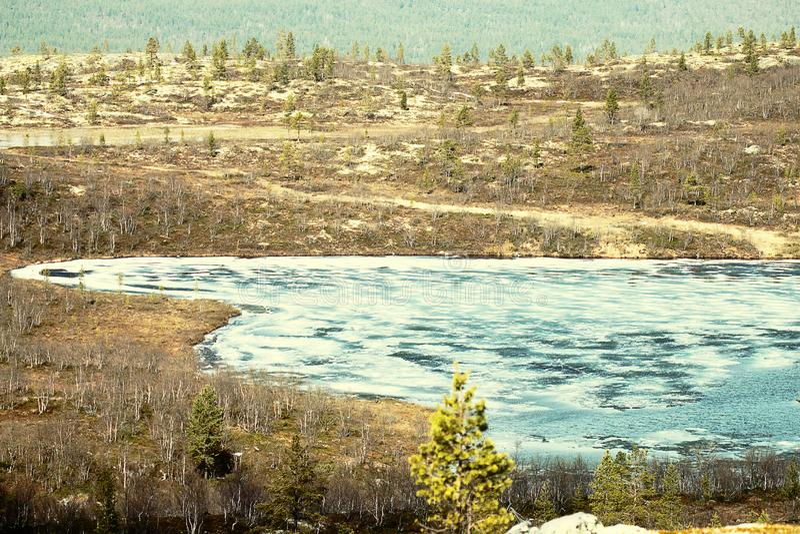 Wiosna na lądzie jeziornym w Laponii, delfin brzozowy obrazy stock