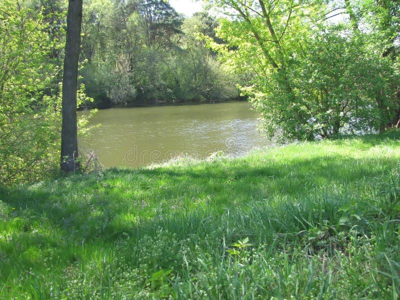 Wiosna nastrój w zielonym lesie zdjęcia royalty free