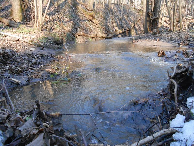 Wiosna nawadnia w lesie fotografia stock