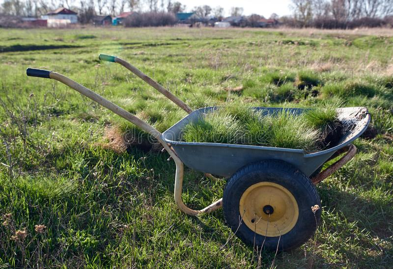 Wiosna ogródu kształtować teren i praca Wheelbarrow ładujący z murawą z zieloną trawą obraz stock