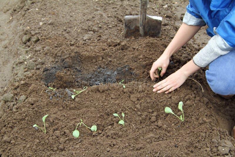Wiosna ogrodowi obowiązek domowy zdjęcia royalty free