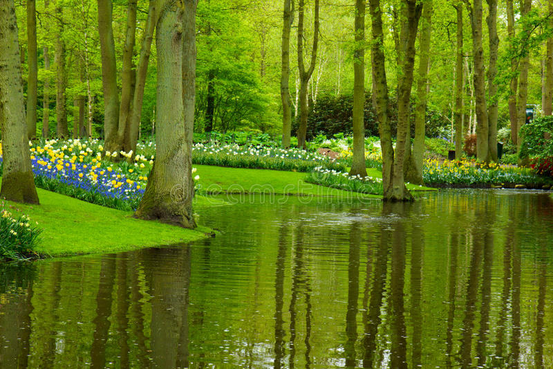 Wiosna ogrodowy Keukenhof zdjęcie stock