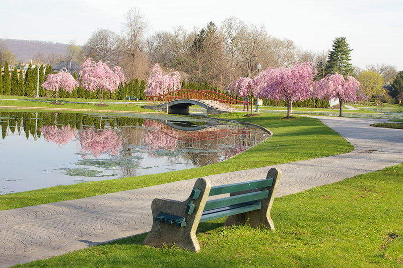 wiosna park obraz stock