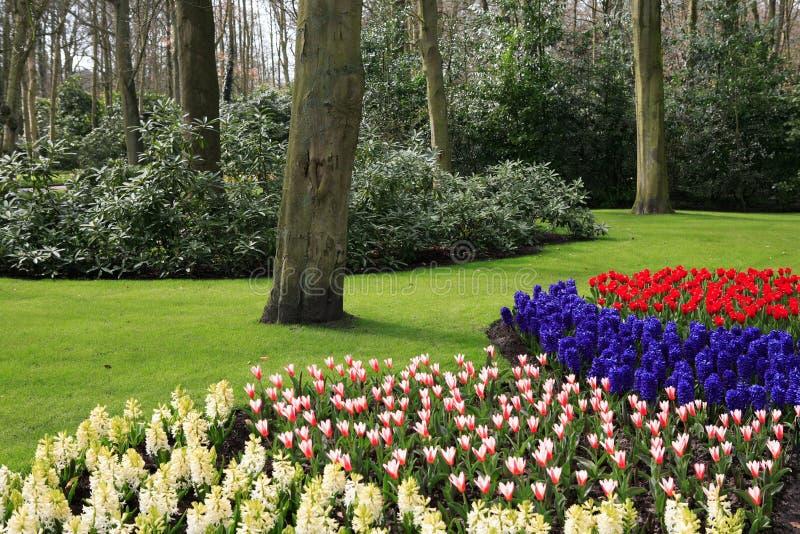 wiosna park obrazy royalty free