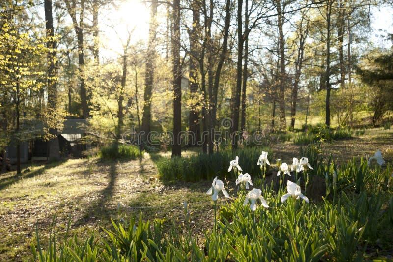 Wiosna przy jeziorem obrazy royalty free