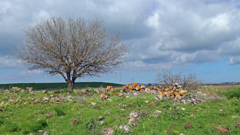 Wiosna przy wzgórze golan zdjęcia stock