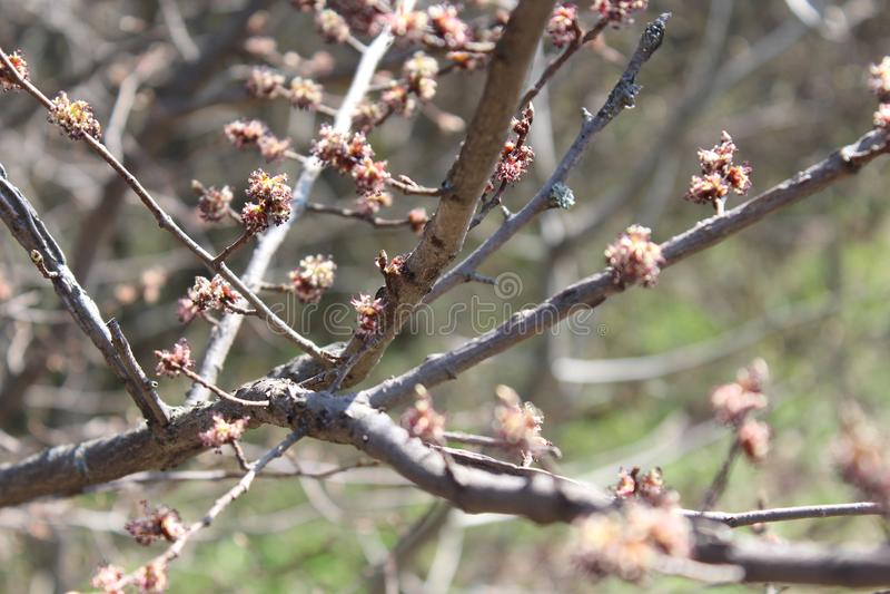 Wiosna przychodził, wiosna nastrój pierwszy opuszcza na drzewie Młody ulistnienie obraz stock