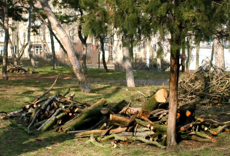 Wiosna przycina drzewa w miasto parku zdjęcie stock