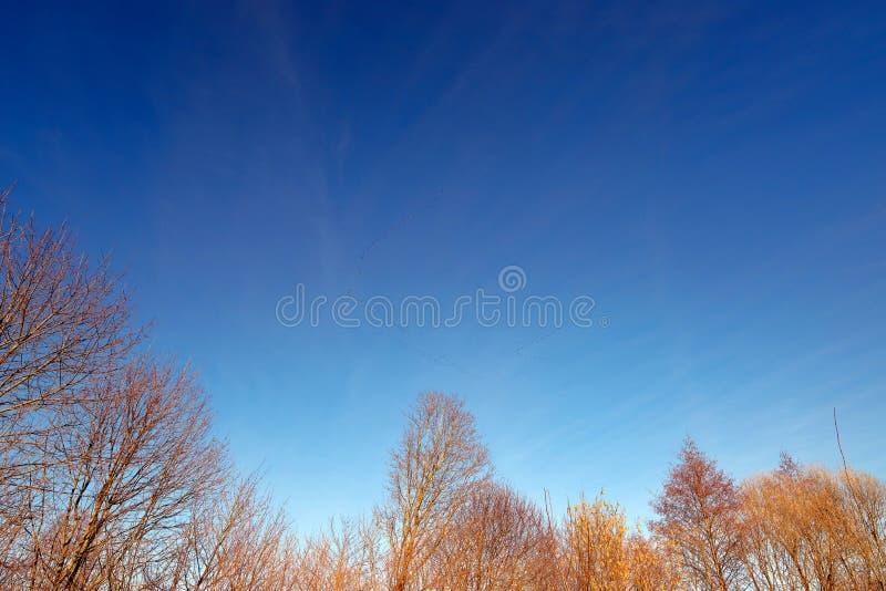Wiosna ptaki migrujący w niebieskim niebie obrazy stock