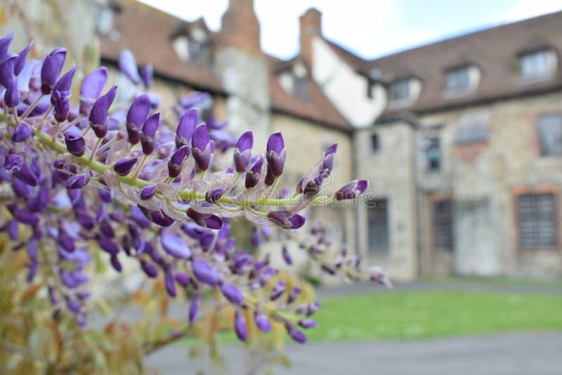 Wiosna purpurowych kwiatów domowy tło fotografia stock