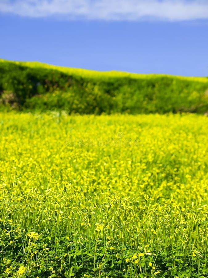 wiosna radości fotografia stock