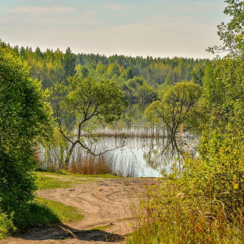 Wiosna ranek na jeziorze Rosja Leningrad region zdjęcie royalty free