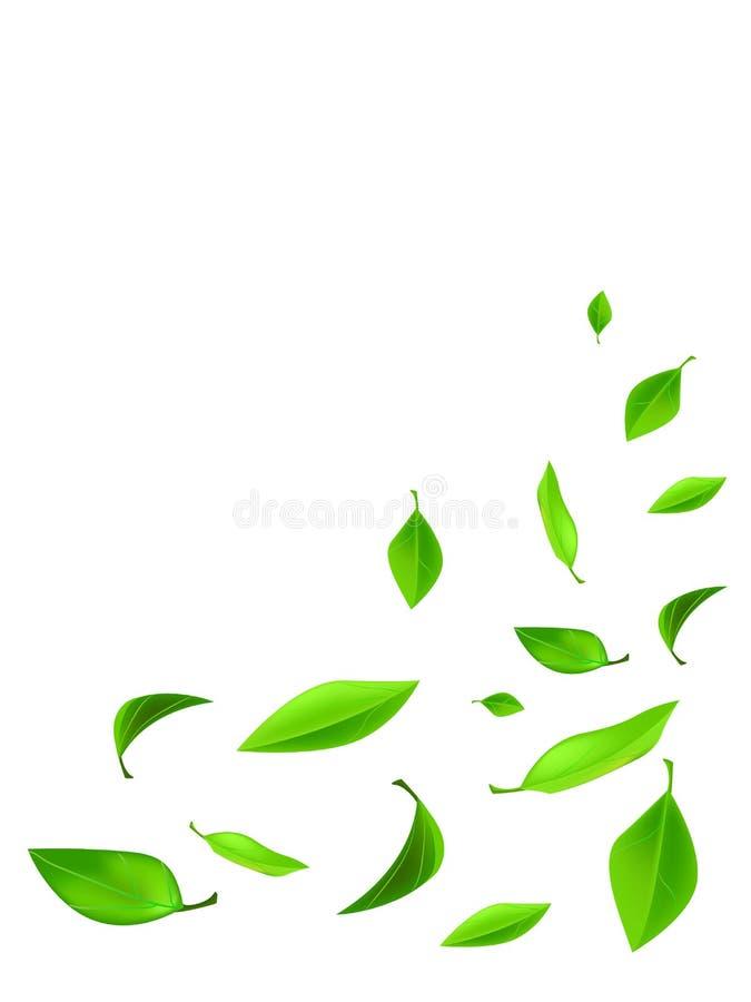 Wiosna skład Rama robić zieleń opuszcza na białym tle od odgórnego widoku, kopii przestrzeń obraz royalty free