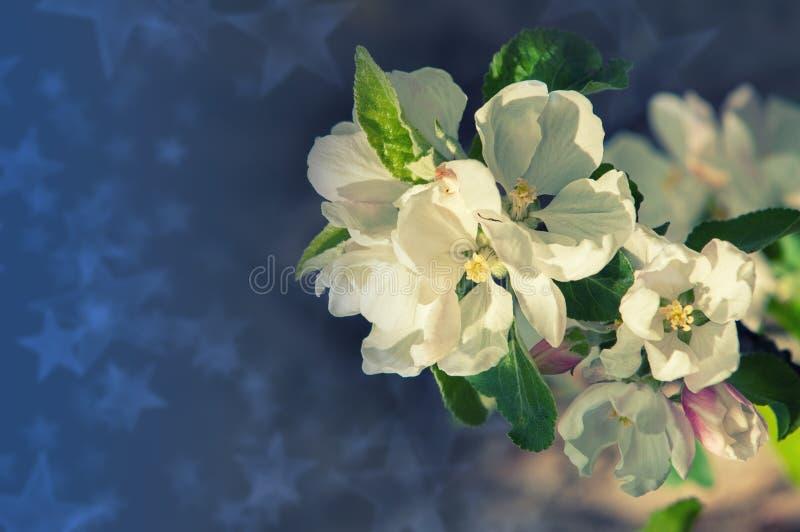 Wiosna Wiosna Springtide prima zdjęcie stock