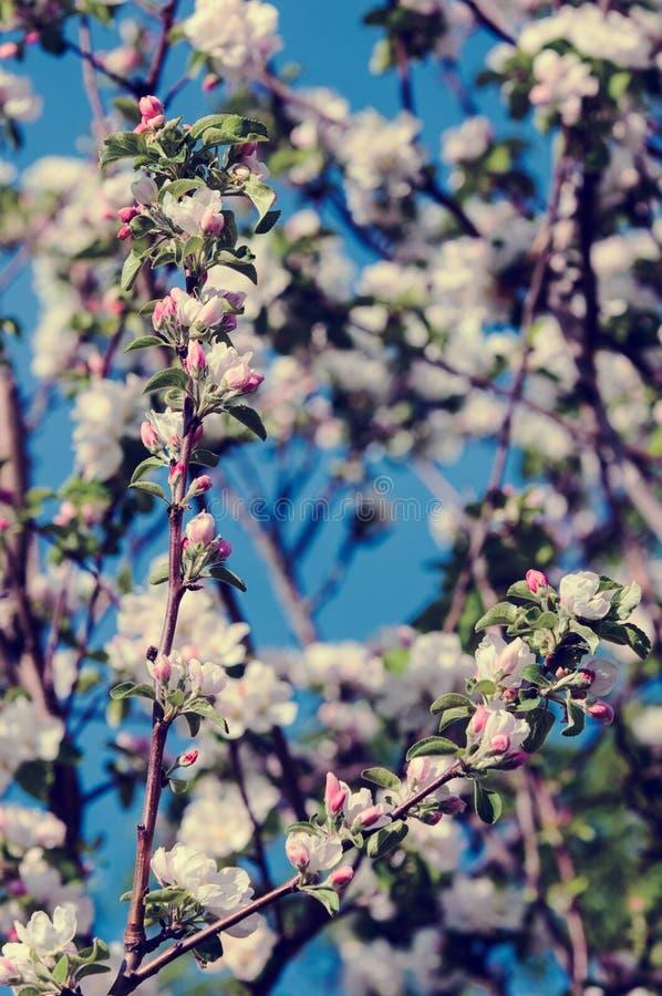Wiosna Wiosna Springtide prima zdjęcie royalty free