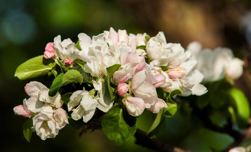 Wiosna Wiosna Springtide prima fotografia royalty free