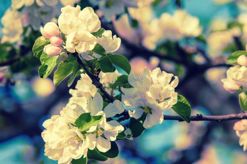 Wiosna Wiosna Springtide prima obrazy stock