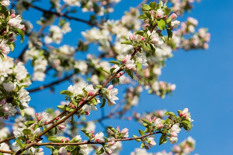 Wiosna Wiosna Springtide prima zdjęcia stock
