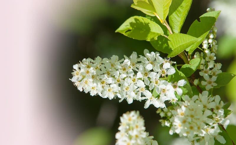Wiosna Wiosna Springtide prima zdjęcia royalty free