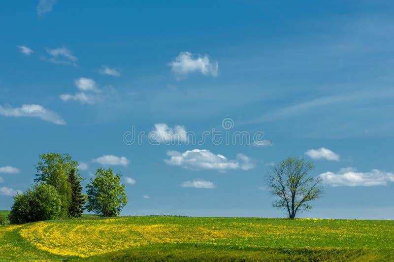 Wiosna Wiosna Springtide prima obrazy royalty free