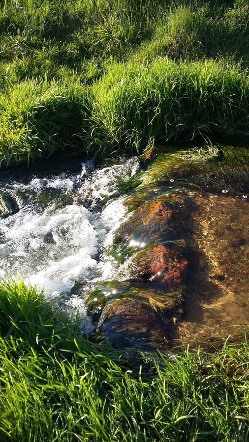 Wiosna strumień obraz stock