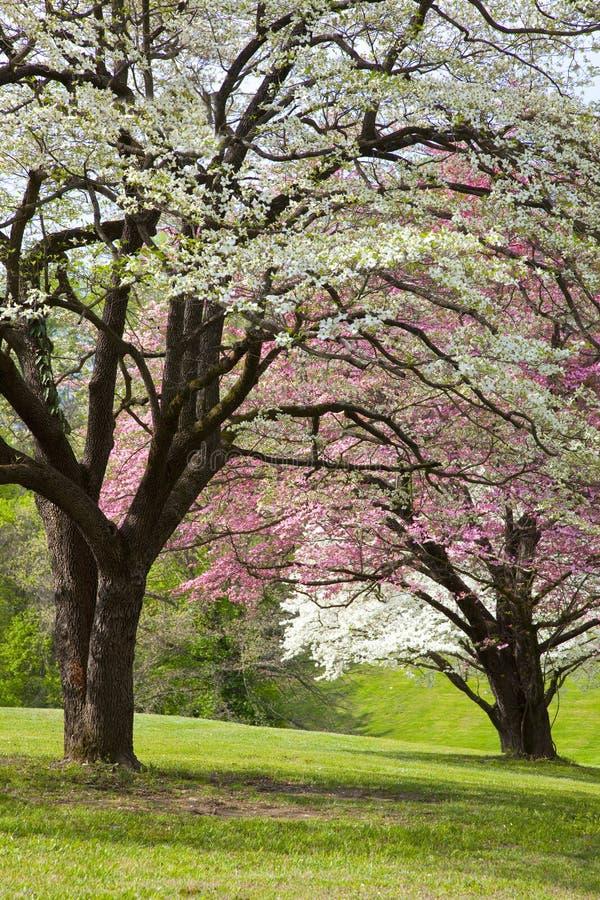 wiosna TARGET875_0_ drzewa obrazy stock