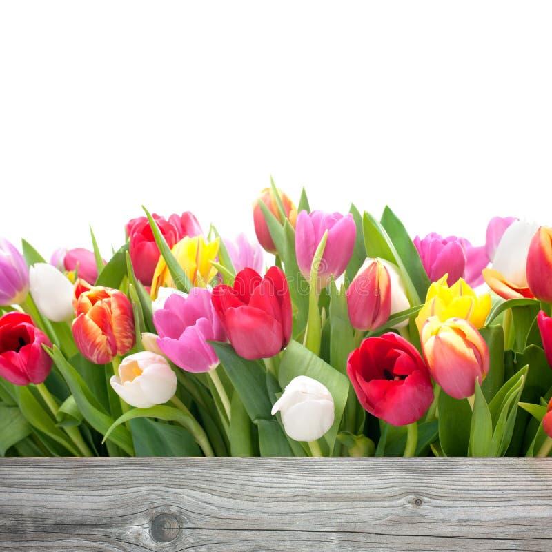 Wiosna tulipanów kwiaty zdjęcia royalty free