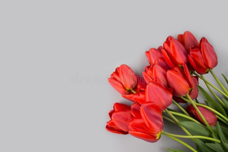 Wiosna tulipanowi kwiaty na r??owego t?a odg?rnym widoku w mieszkaniu k?a?? styl Powitanie dla kobiet lub matek dnia obraz stock
