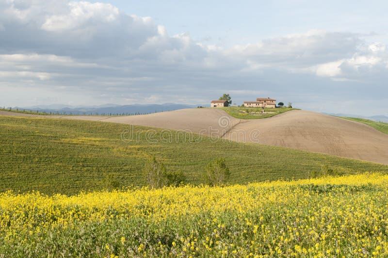 wiosna Tuscan obraz royalty free
